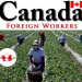 canada foreign workers